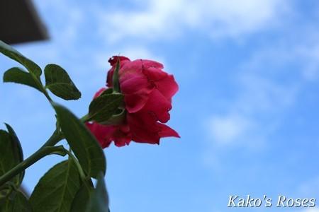 s-IMG_4479.jpg