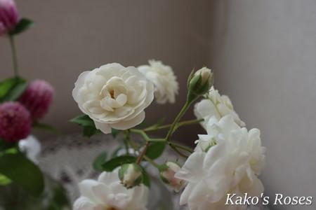 s-IMG_4637.jpg