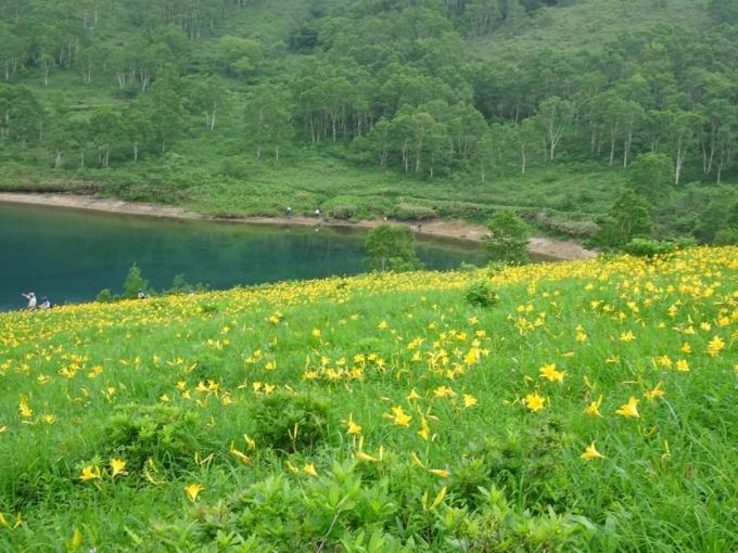キスゲのお花畑3