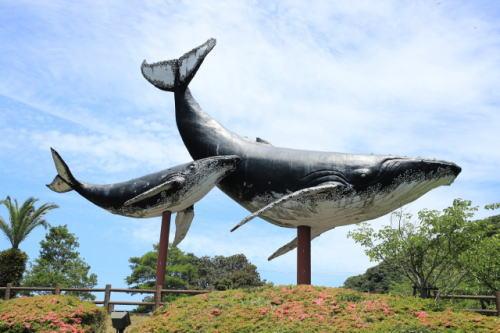 [韓国の反応]日本捕鯨再開「クジラよりも日本が先に絶滅すればいいのに」