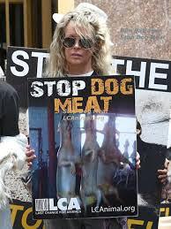 [韓国の反応]キム・ベイシンガー犬肉食用反対デモのため初伏に韓国へ「クジラをとってる日本のほうを非難しろよ」の声