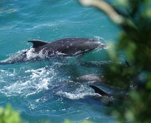 [韓国の反応]太地町で「イルカ追い込み漁」解禁  「極めて残酷」と環境団体「放射能で世界を汚染し、クジラを虐殺していることを大義名分としてオリンピックのボイコットをすべきだ」