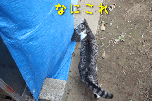 201909211934235a0.png