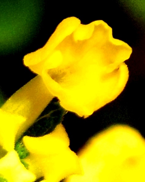DSCN0514-5.jpg