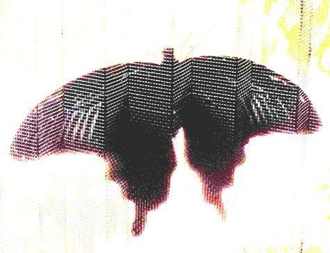 DSCN0997-1-4.jpg
