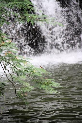滝にカゲロウ