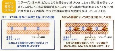 AGEs蓄積の仕組み