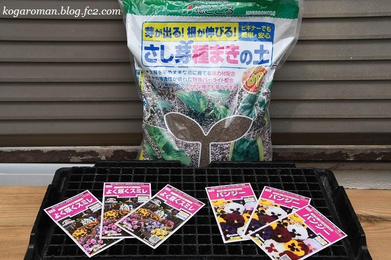 よく咲くスミレ種まき日記