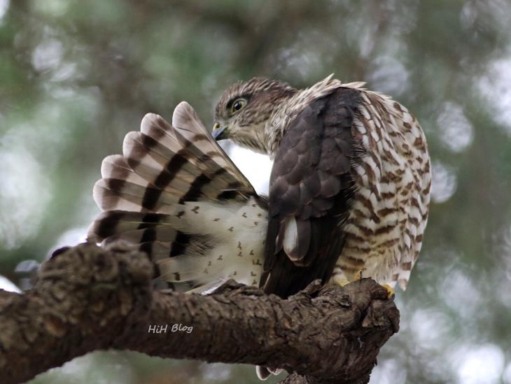 8_親を待つ幼鳥