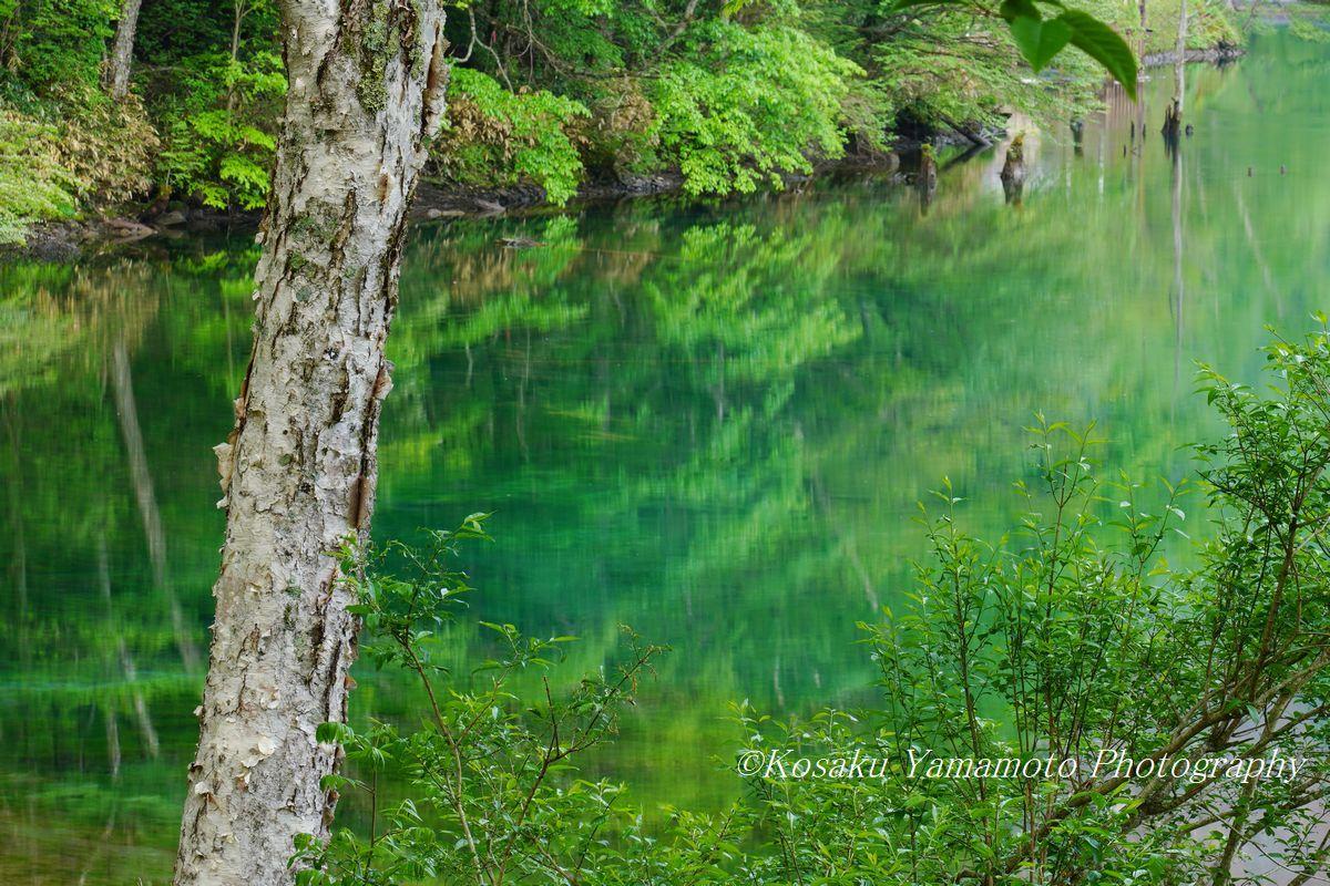 緑映大正池 (上高地