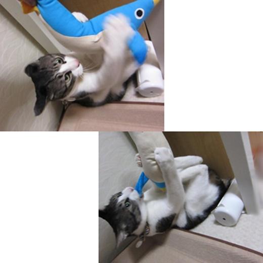 cats1_201907112116487b3.jpg