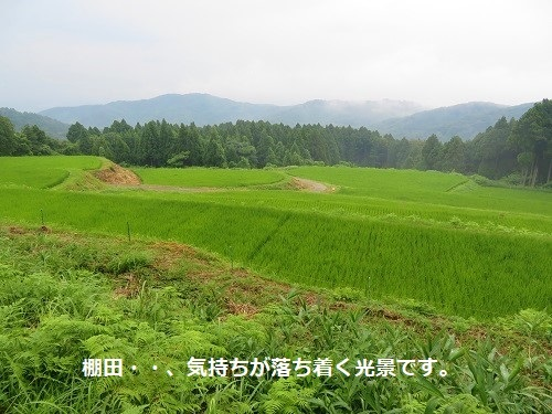 e-takasu (6)