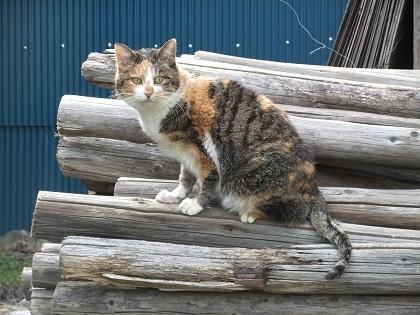 自由猫ミケ子