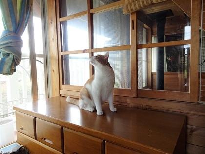 猫部屋にやってきました。