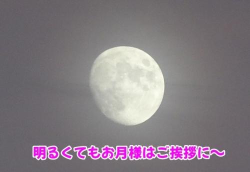 お月様もご挨拶