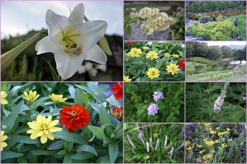 満濃公園の花たち