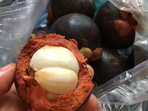 果物の女王マンゴスチン