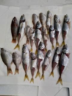 ブログ2 0726魚 (1)