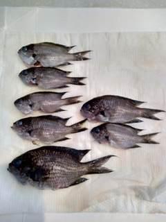 ブログ2 0726魚 (2)