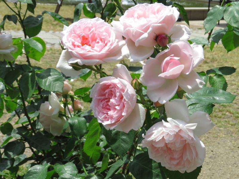 Rosa Kathrin Morley