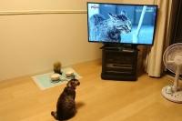 テレビの前で座っているネコ