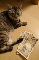 お金には関心のないネコ