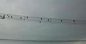 カラスの音楽学校♪