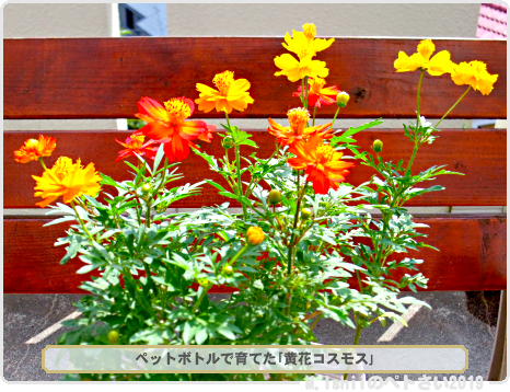 母に贈るお花01