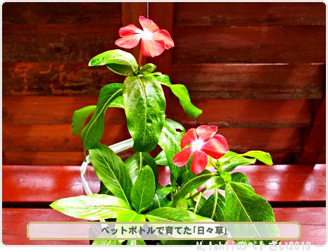 母に贈るお花02