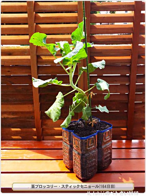 ペトさい(茎ブロッコリー)60