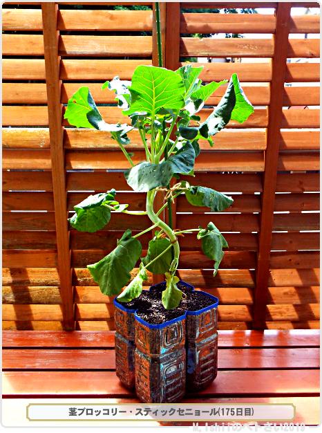 ペトさい(茎ブロッコリー)65