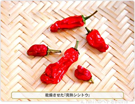 ペトさい(改良シシトウ・Remake)38