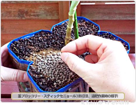 ペトさい(茎ブロッコリー)72