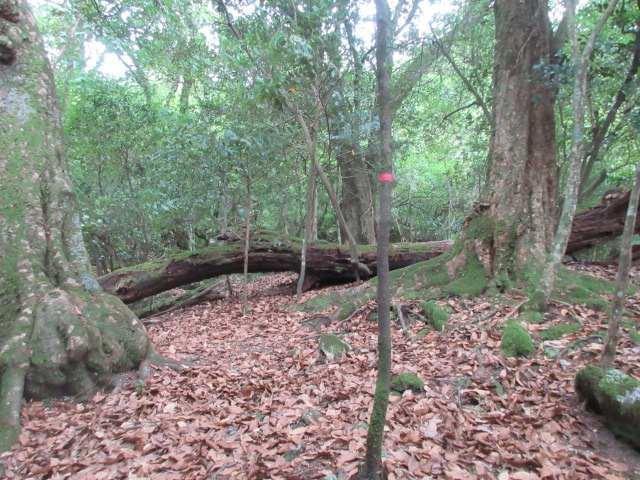 IMG0014JPG倒木が現れると急登も終わり