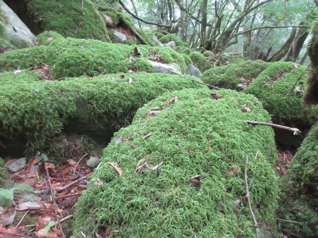 IMG0023JPGモフモフの岩
