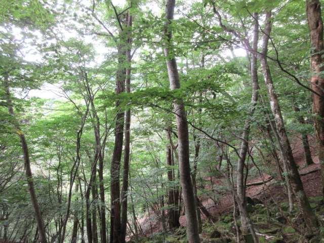 IMG0018JPG樹林の径