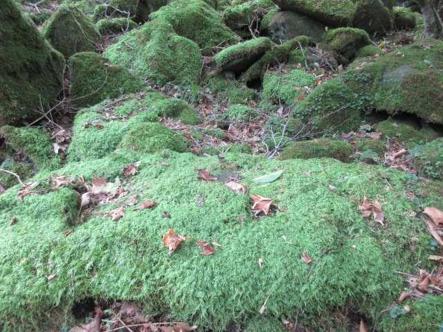IMG0039JPG苔の岩