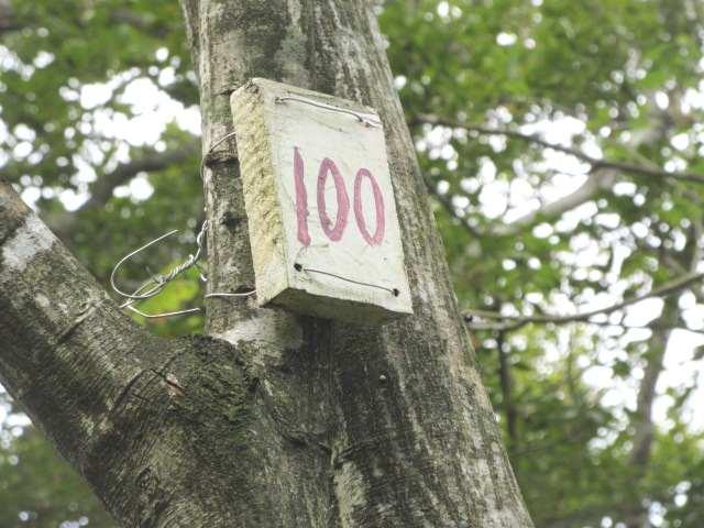 IMG0052JPG100番達成