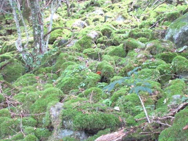 IMG0082JPG苔の岩原