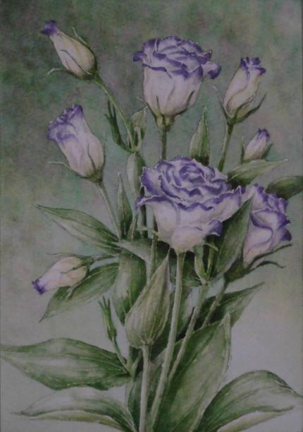 トルコキキョウ 1909