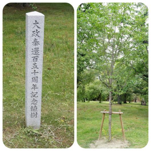 二条城14(大政奉還記念樹)(1)
