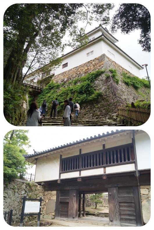 彦根城2(太鼓門・続櫓)(1)