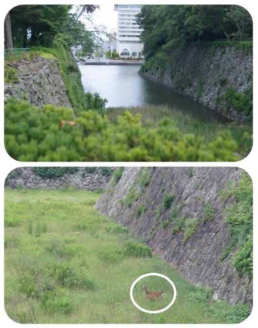 名古屋城14(1)