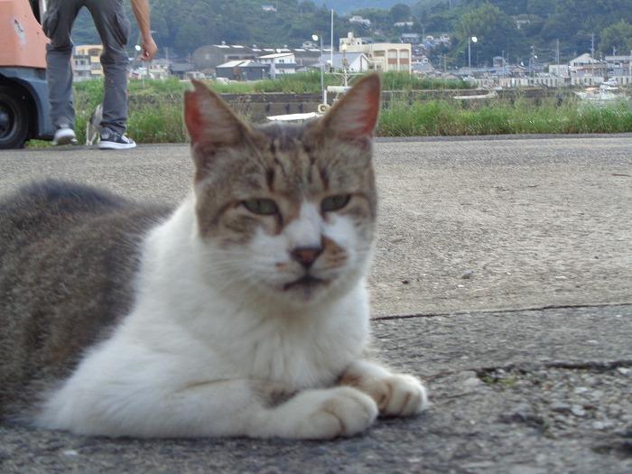 mi-kunn0068-s.jpg
