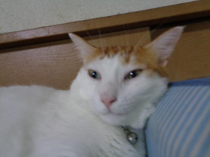momiji0104-s.jpg