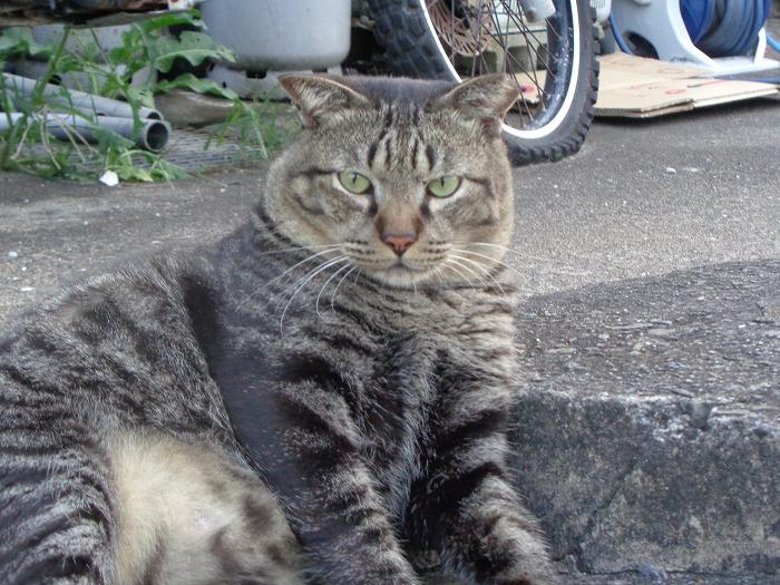 torajirou0126-s.jpg