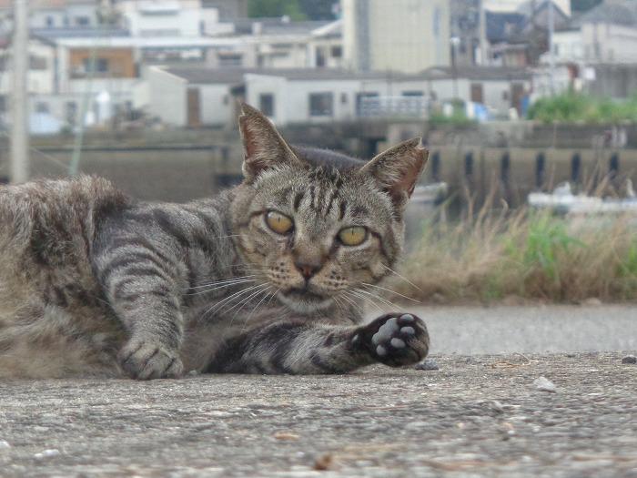torakichi0114-s.jpg