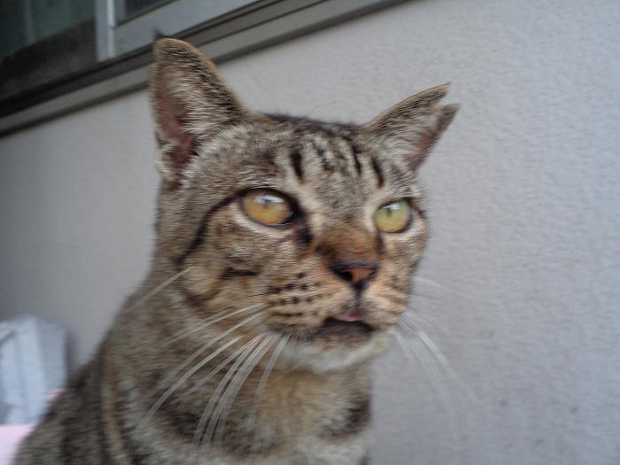 torakichi0116-s.jpg