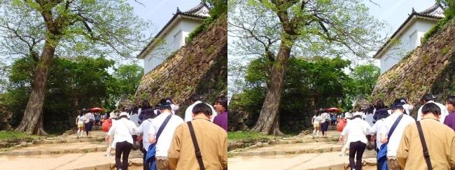 彦根城 太鼓丸の坂道(平行法)
