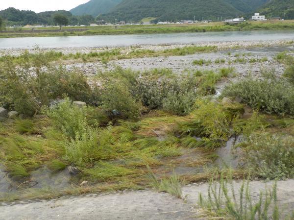 水が引いた長良川